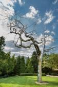Metallic tree — Stock Photo