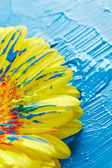 Gerber flower with paint — Stock Photo