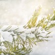 Branch of pine tree with snowflakes — Stock Photo #57093745