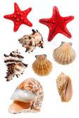 Coquillages et étoiles de mer — Photo