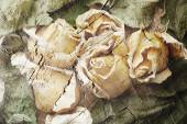 Dried flowers of roses — Stock Photo