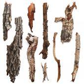 Bark trees — Stock Photo
