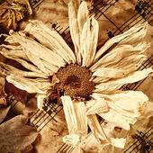 Torr blomma — Stockfoto