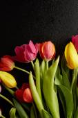 Tulips with drops of water — Stock Photo