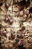 Dry roses on vintage paper background — Stock Photo