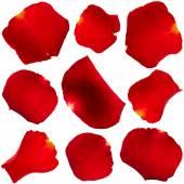 Set of rose petals — Stock Photo