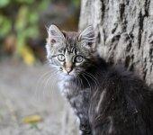 Retrato de um gatinho — Fotografia Stock