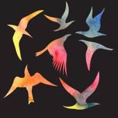 Watercolor set bird — Stock Vector
