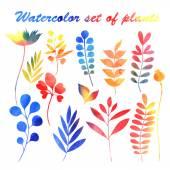 Aquarell-Gruppe von Pflanzen — Stockvektor