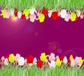 Beautiful background of red, yellow, pink and white tulips on a — Stock Photo