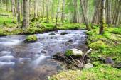 Spring Forest Lanscape with River Flowing — Stock Photo