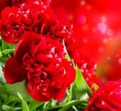 красные пионы — Стоковое фото