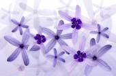 Purple flowers background — Stock Photo