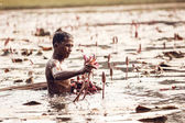 Unidentified man gather lily flowers in Angkor Wat conplex — Stockfoto