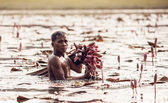 Unidentified man gather lily flowers in Angkor Wat conplex — Stock fotografie