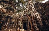 Angkor wat templet — Stockfoto