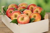 Apples in a box in autumn — Stock Photo