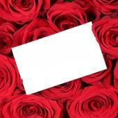 Tarjeta de felicitación de vacía con copyspace en rosas rojas cumpleaños Vale — Foto de Stock