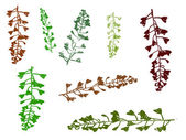 Leaves 8 — Stock Vector