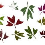 Leaves 2 — Stock Vector #71440569