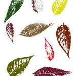 Grunge elements - Autumn Leaves II — Stock Vector #71441245