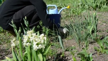 Gardener weeding flower beds in spring garden. — Stock Video