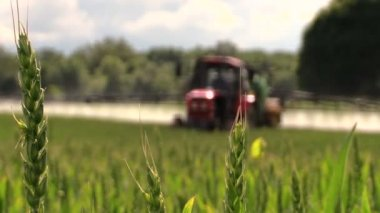 Farmer spray agricultural tractor fertilizer on cereal field — Stock Video