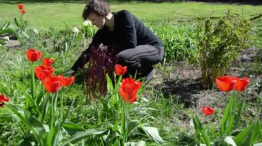 Tired gardener woman weeding flower bed in spring — Stock Video