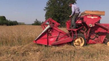 Boerderij werknemer oogst tarwe planten met kleine combine harvester — Stockvideo