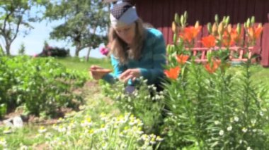Blur young girl gather chamomile herb plant blooms in yard — Stock Video