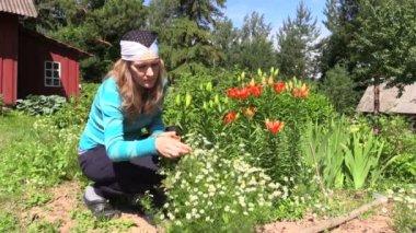 Turn view girl reap organic camomile and grandma uproot herbal — Stock Video