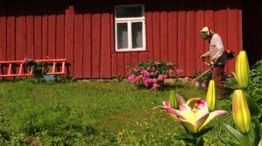 Gardener man with trimmer cut grass between flowers near house — Stock Video