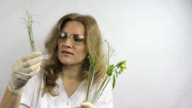 Technicus vrouw onderzoeken kolven met gemodificeerde erwt planten — Stockvideo