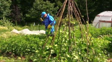Peasant farmer man spray potato plants in garden with pesticides — Vídeo de Stock