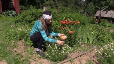 Woman pick organic camomile in garden, domestic medicines — Stock Video