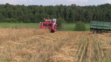 Farmer harvest wheat plant with red combine in agriculture field — Stock Video
