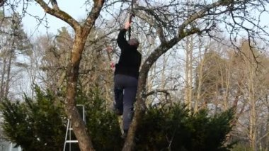 Gardeners saw trim fruit tree branch with special tool in spring — Stock Video