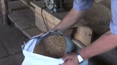 Farmer man pour sifted grain from bucket to sack in mill — Stok video