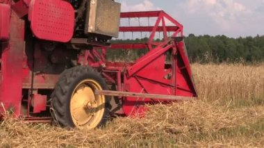 Close up harvester threshing in barley field. Rural activities. — Vídeo stock