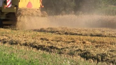 Back view farm yellow harvester combine working in grain field — Stock Video