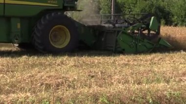 Rural combine harvester reaps cereal wheat field — Stock Video