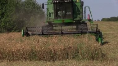 Harvester machine tresh pease plants. Stork birds — Stock Video