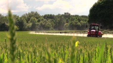 Tractor sprayer work in green young cereal field on summer day — Stock Video