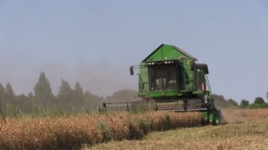 Agriculture combine harvester work in cereal field — Stock Video