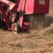 Process of harvesting with combine in barley field. Zoom out — Stock Video #67227057