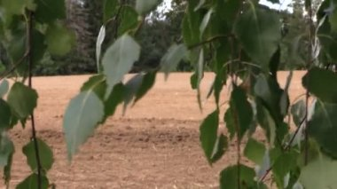 Tree leaves move and tractor fertilize sow field in summer — Stock Video