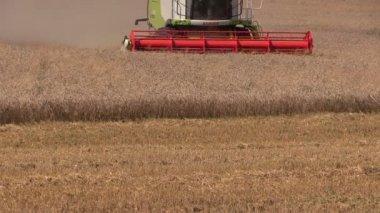 Colheitadeira de debulha campo de trigo — Vídeo stock