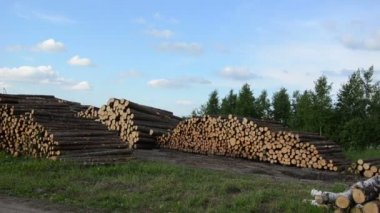 Wood felling industry. Stack birch and pine tree logs in autumn — Stock Video