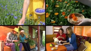 Hand gather herbs and women drink herbal tea. Clips collage. — Stockvideo