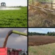 Tractor fertilize and plow field. Combine harvest wheat. Collage — Stock Video #69638299